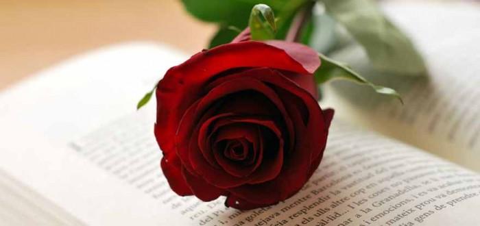 Sant Jordi - 23 de abril. Regala un libro, regala metafísica